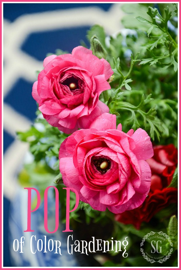 POP OF COLOR GARDENING AND A $200.00 GIVEAWAY
