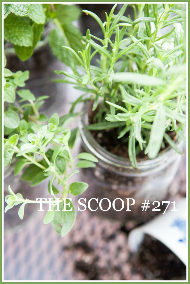 THE SCOOP #271-Get the best from home and garden blogs all in one place. Lots of ideas and inspiration