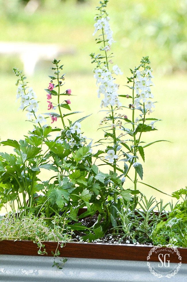 PLANTING HERBS IN RAISED BEDS- learn how to plant and care for herbs for decorating and cooking