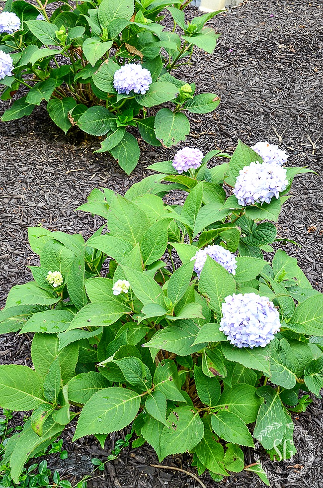 REPLACING AGING LANDSCAPING- A COMMON SENSE GUIDE - StoneGable