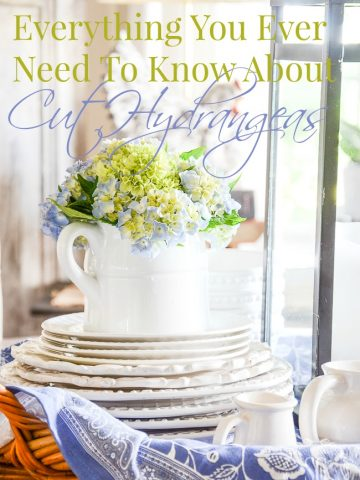 EVERYTHING YOU EVER NEED TO KNOW ABOUT CUT HYDRANGEAS