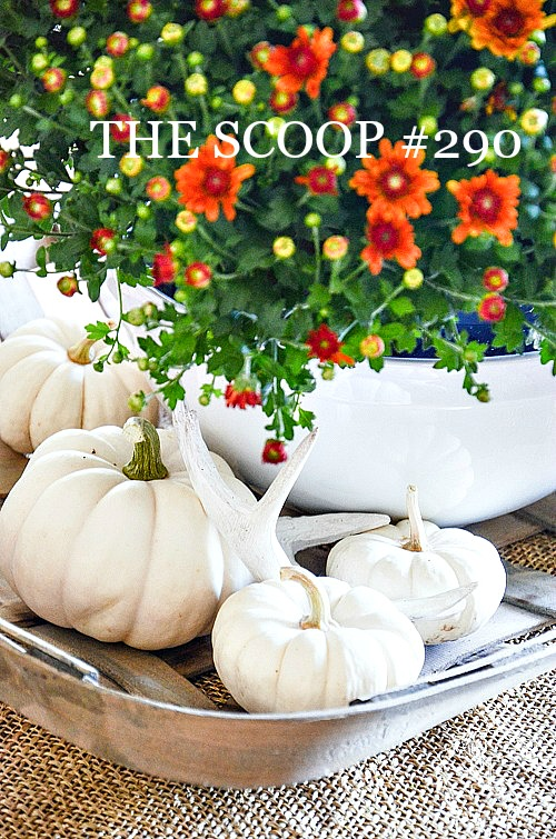 THE SCOOP #290- Get the best of home and garden post on the web. Lots of fall inspired posts too!