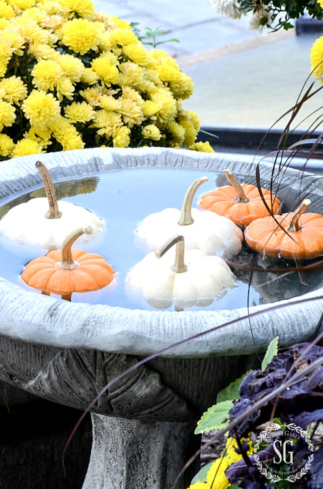 pumpkins floating in a birdbath