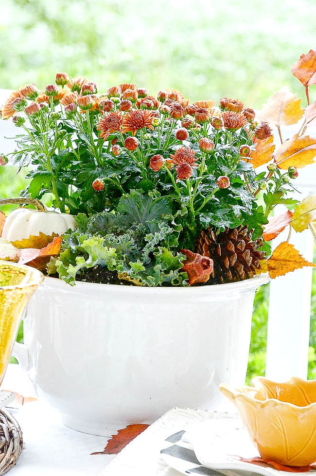 mums and flowering cabbage in a white bowl