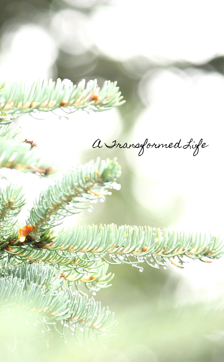 A TRANSFORMED LIFE - Scripture to live by!