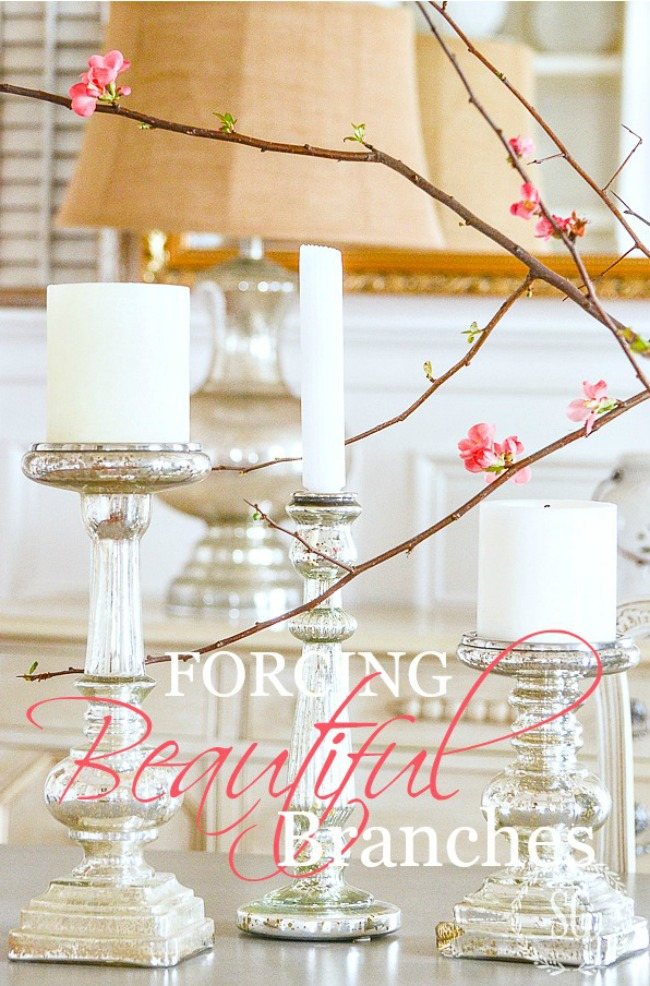 HOW TO FORCE BEAUTIFUL SPRING BRANCHES- Such an easy way to bring springtime into your home!
