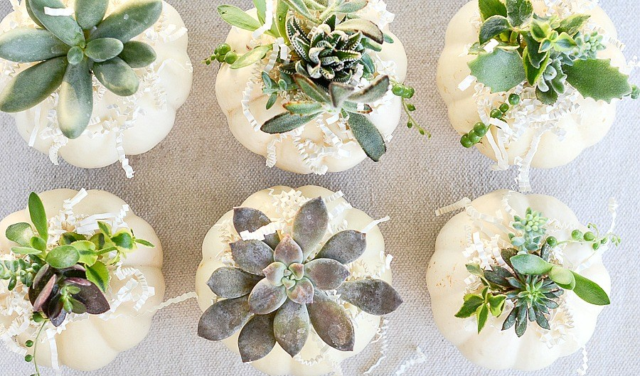 DECORATING WITH SUCCULENTS- Succulents are an easy, kitschy and very cool plant. They look adorable in unusual planters and love being grouped. Come learn how to use them in decor!