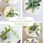 COLLAGE OF SUCCULENT TOPPED PUMPKINS
