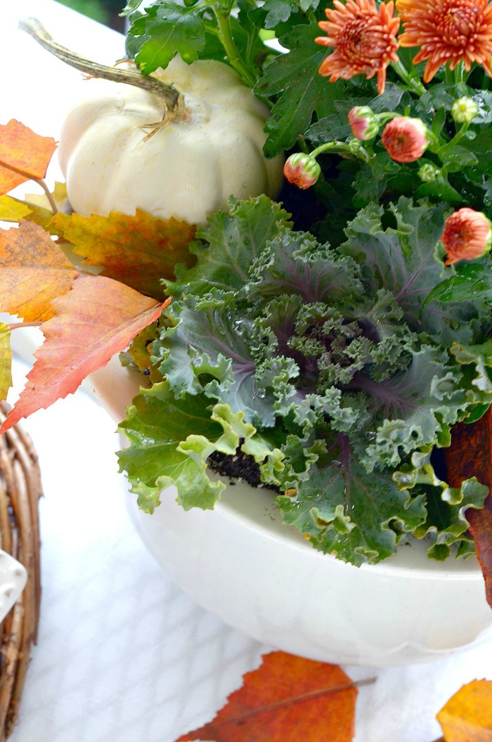 fall mums with white pumpkins and flowering kale in a big white pot