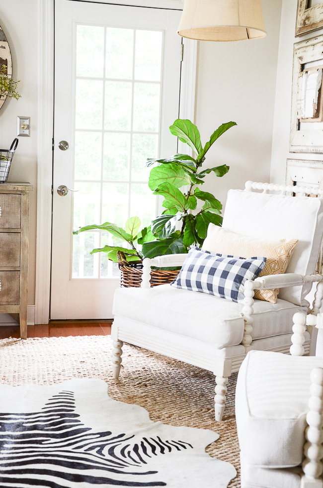 two white spindle chairs and a large fiddle leaf fern in the living room that are  clean and tidy