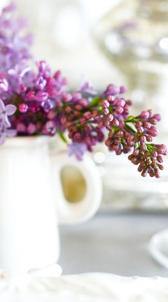 small branch of lilacs