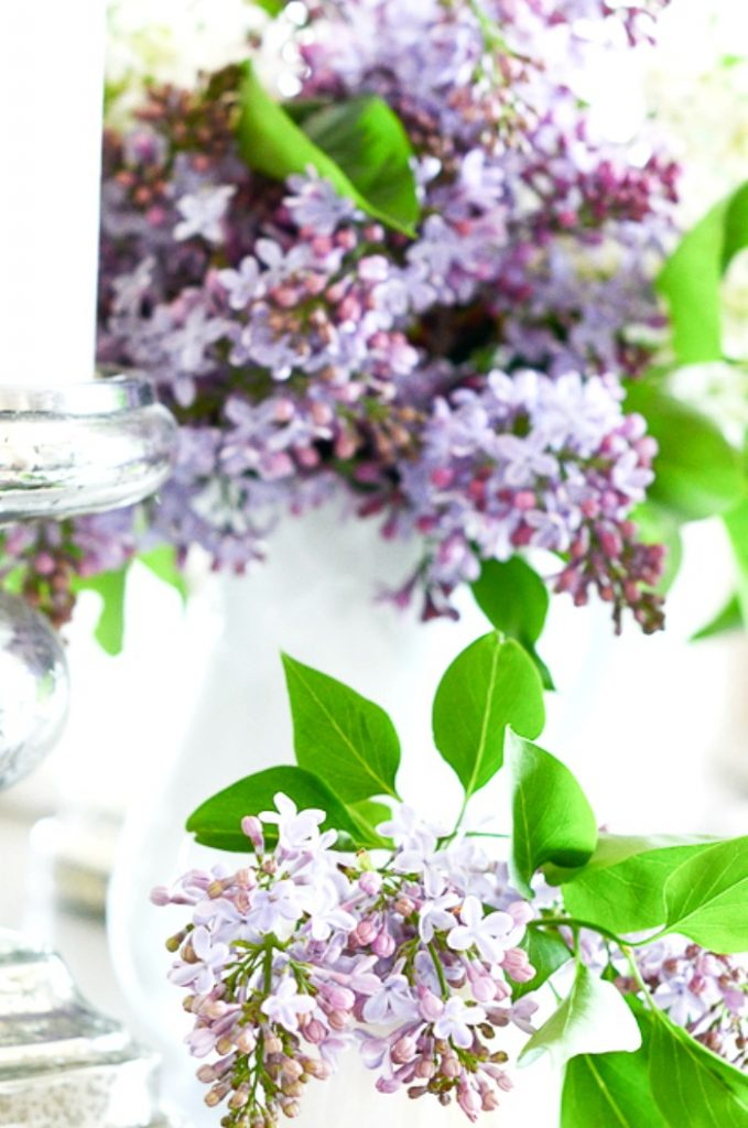 lilacs in two containers