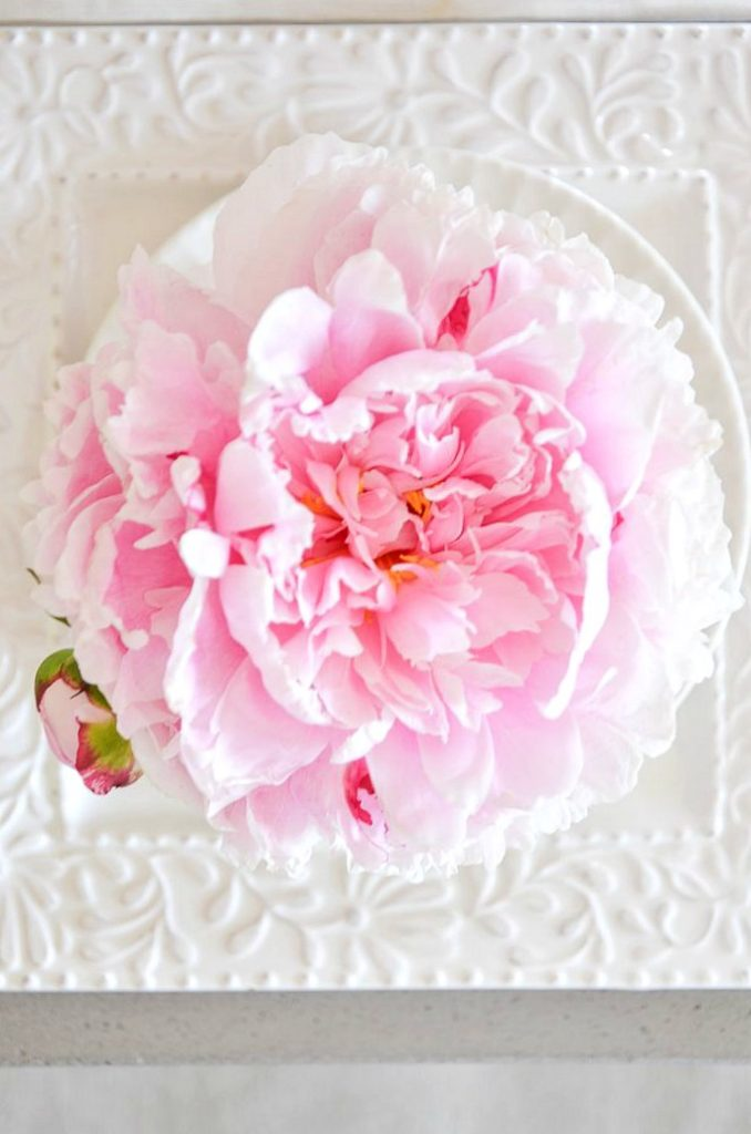 one single peony at each place setting on a table