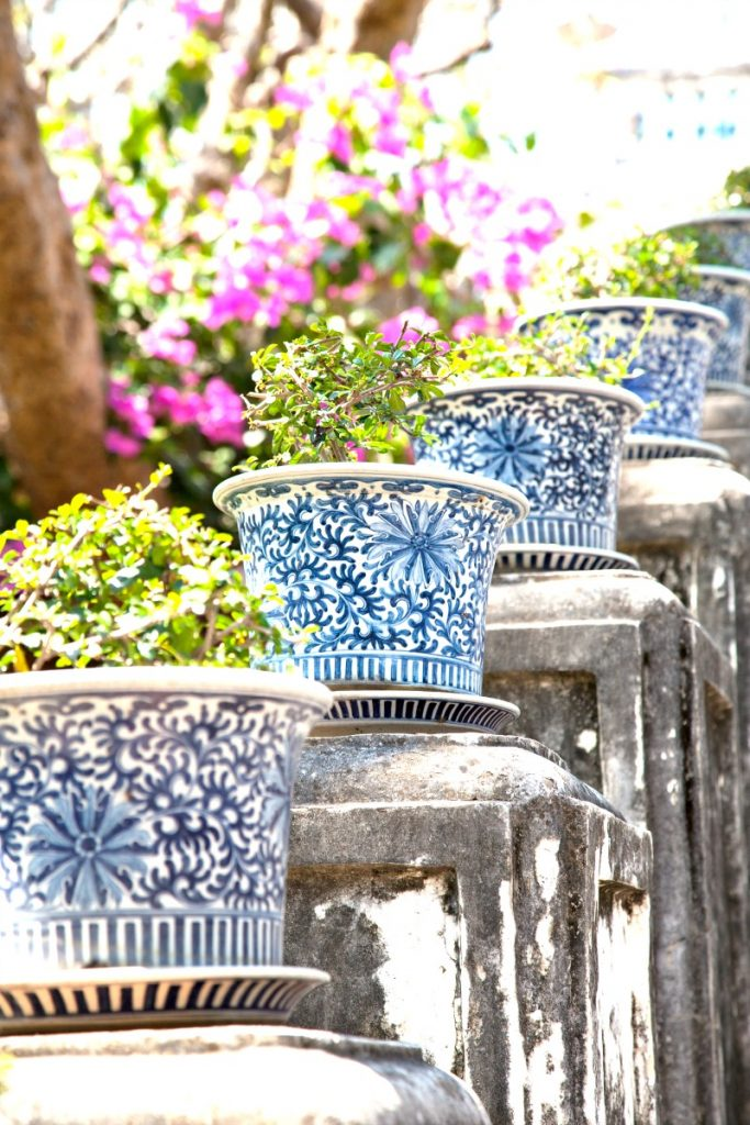 row of blue and white pots with small evergreen trees