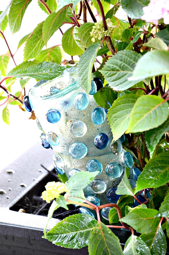 self watering bottle in a hydrangea container garden