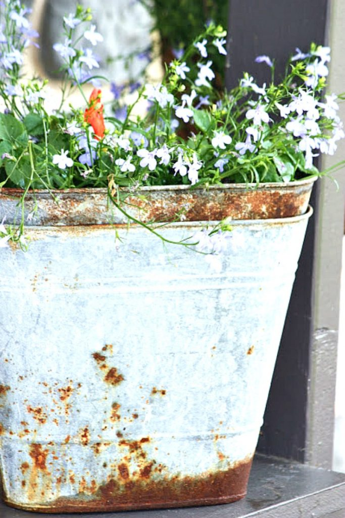 tiny blue flowers in a rusted galvanized container