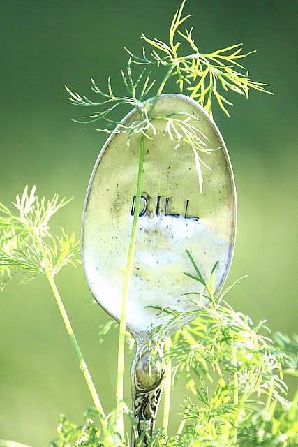 dill silver spoon garden marker