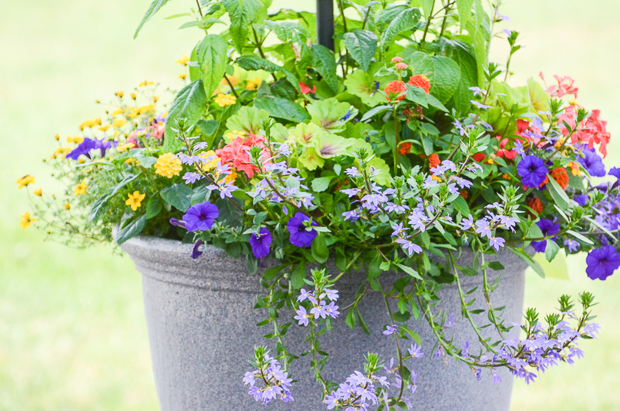 pot filled with pretty spring annuals