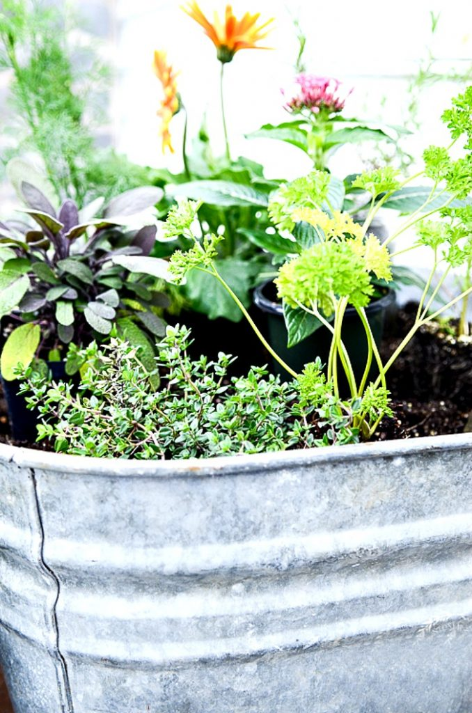 herbs and flowers in a container garden