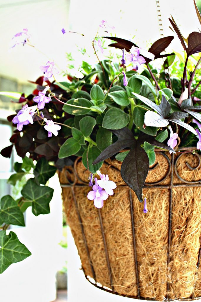 hanging baskets of tiny purple flowers