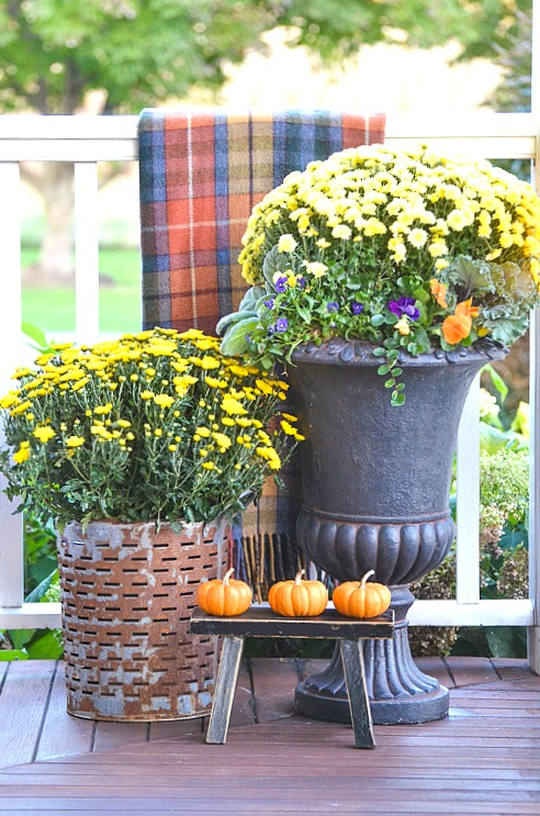 big pots of yellow mums