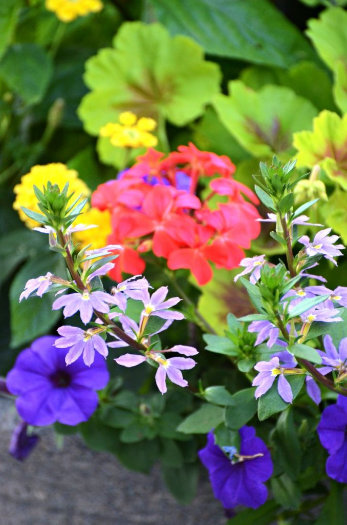 colorful flowers in container on the patio