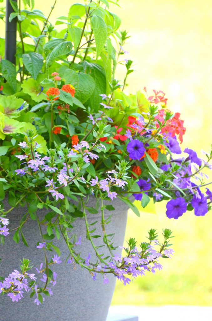 purple petunias and fairy flowers spilling out of a patio container