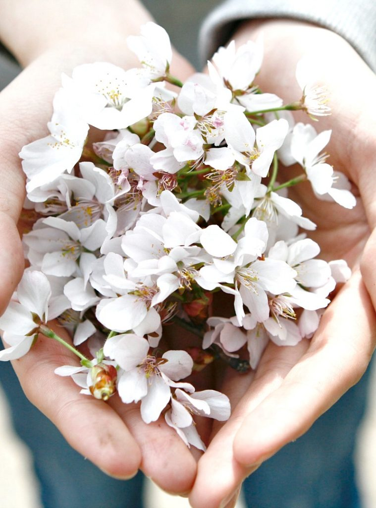 person holding a handful of blossoms