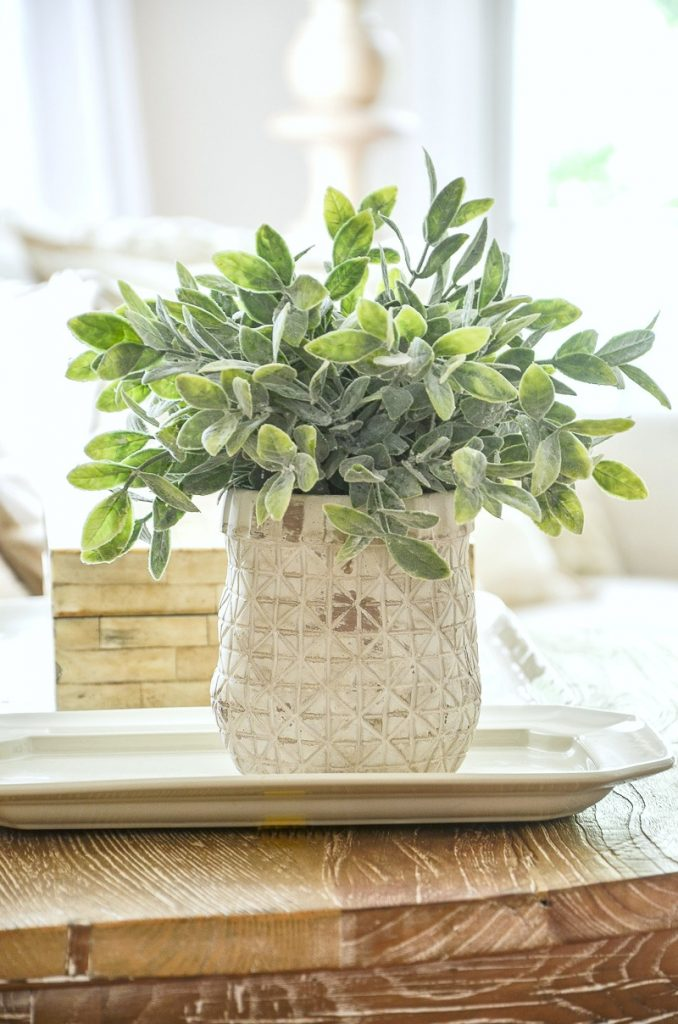 pretty little green plant in white pot in the living room