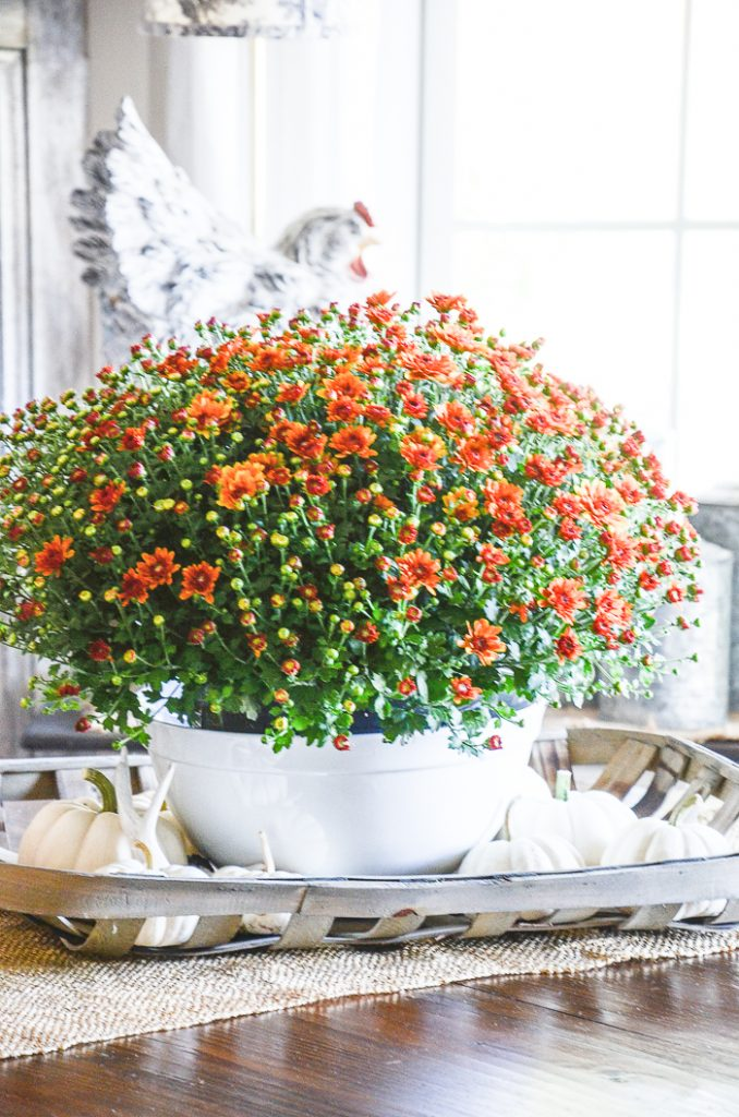 burnt orange mums in a white bowl