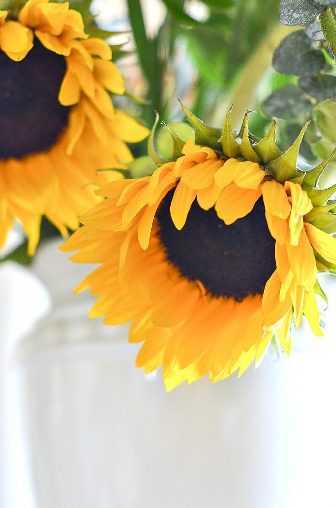 pretty yellow and black sunflowers