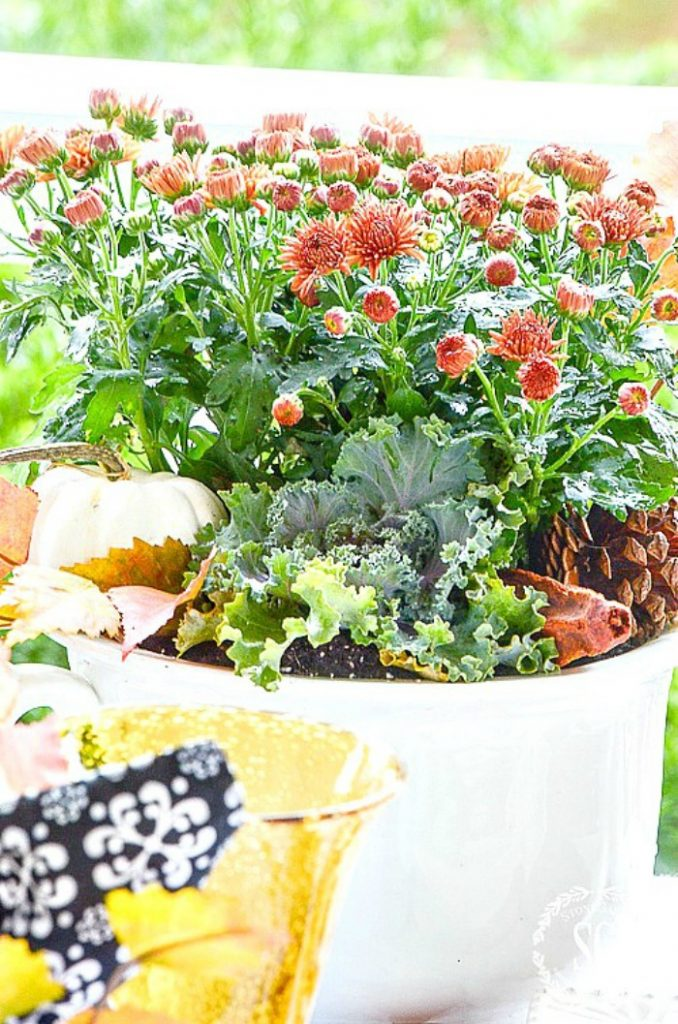 mums with flowering kale and fall leaves in a white bowl