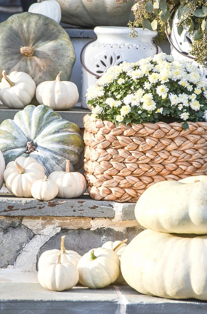 BLUE AND GREEN PUMPKINS AND WHITE MUMS ON STEPS