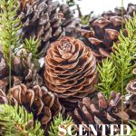 scented pinecones in a bowl