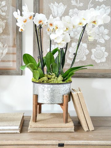 EASY AND BEAUTIFUL ORCHID ARRANGEMENT DIY