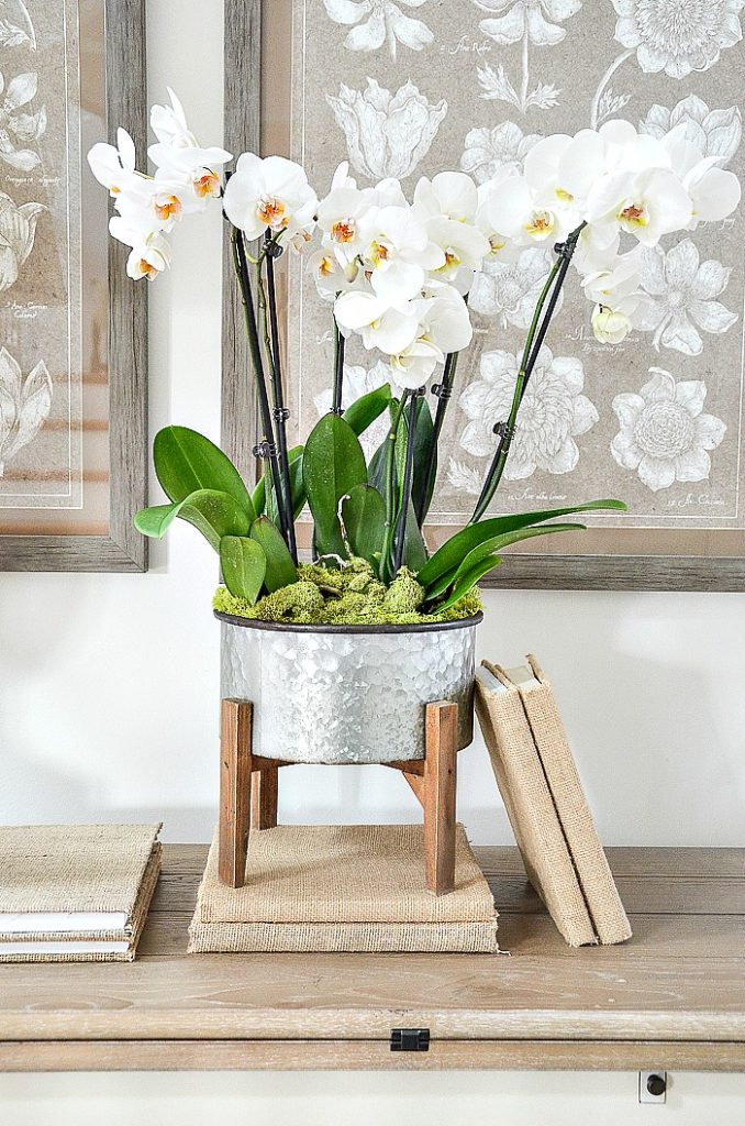 Eloise Life Like Fl Arrangement With Pink Spotted Phalaenopsis Orchids Orchid Leaves And Bamboo
