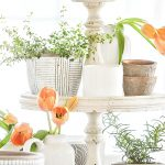 HERBS IN CUTE POTS AND ORANGE TULIPS