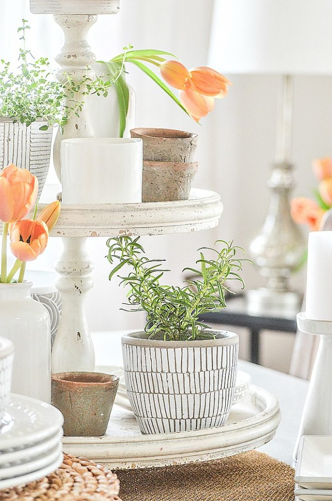 POTS OF HERB S AND TULIPS