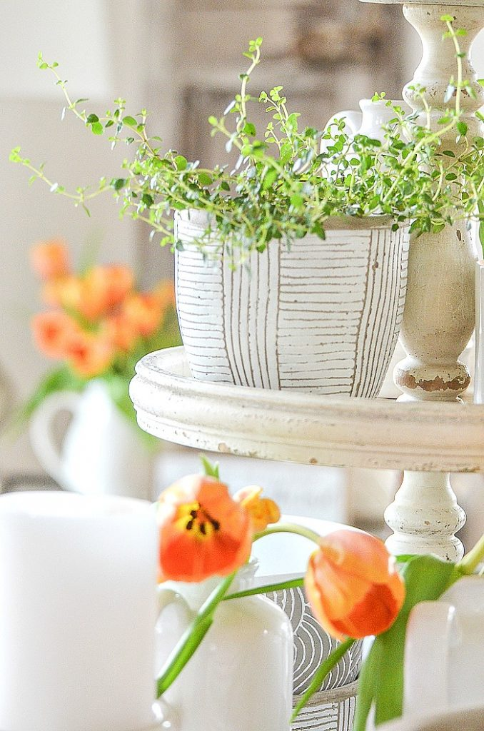 LITTLE WHITE POTS FILLED WITH HERBS AND CONTAINERS OF ORANGE TULIPS