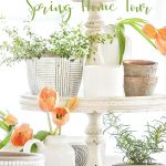 POTS OF HERBS AND TULIPS