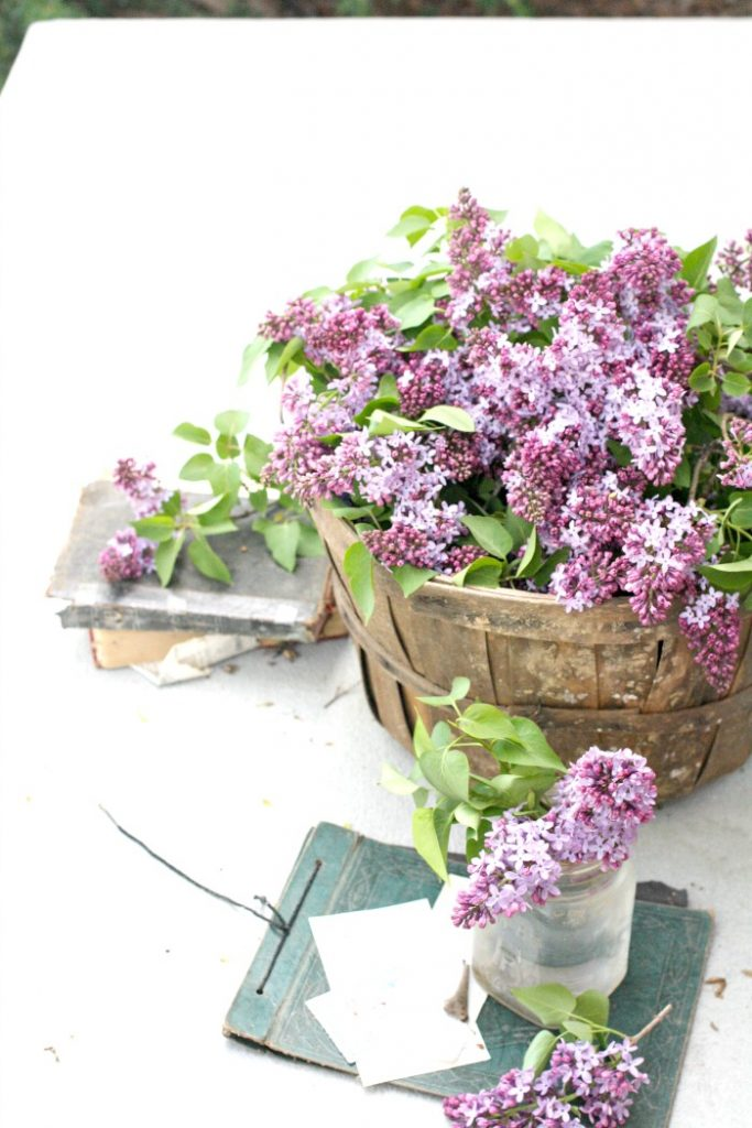 A BASKET FILLED WITH PRETTY LILACS