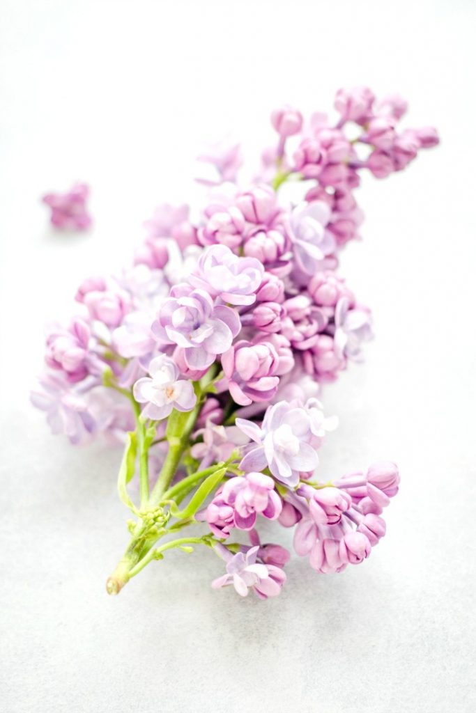 A SPRING OF LILAC MAKES A CLEAN HOME SMELL SO GOOD!