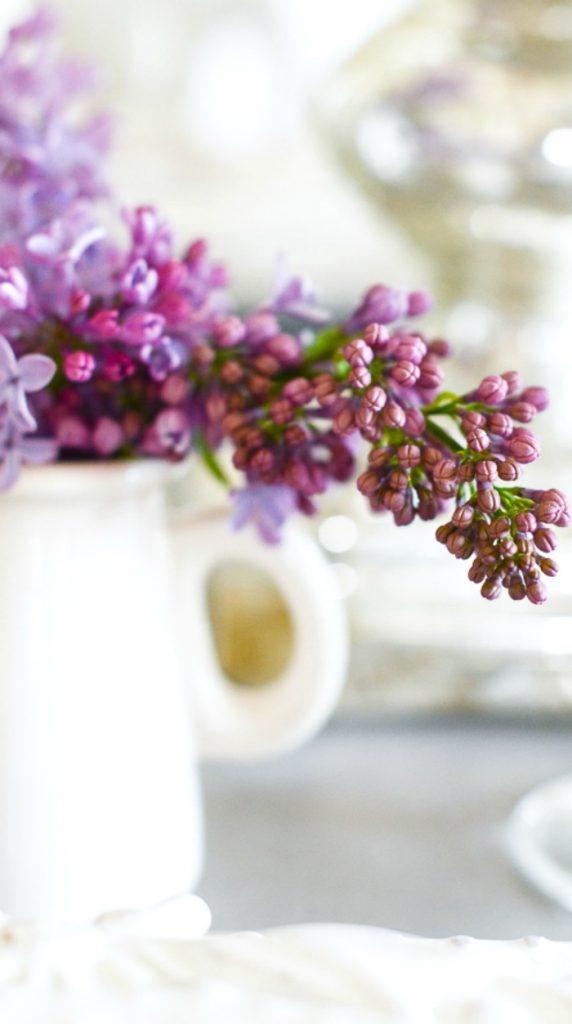pretty budding lilacs in a white creamer