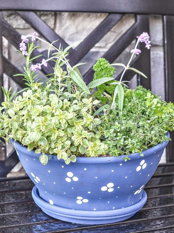PRETTY CONTAINER HERB GARDEN DIY