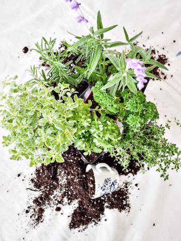 HERB CONTAINER GARDEN GUIDE