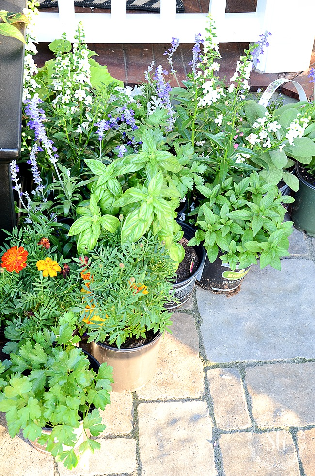 PLANTS WAITING TO BE POTTED