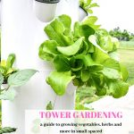 lettuce and other veggies in a tower garden