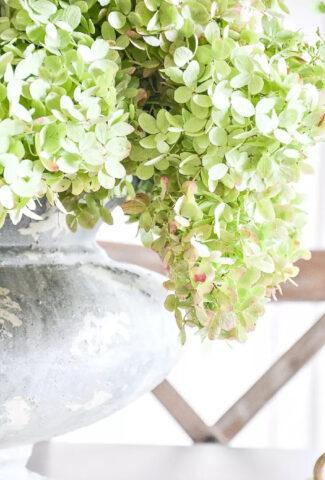 green dried hydrangeas