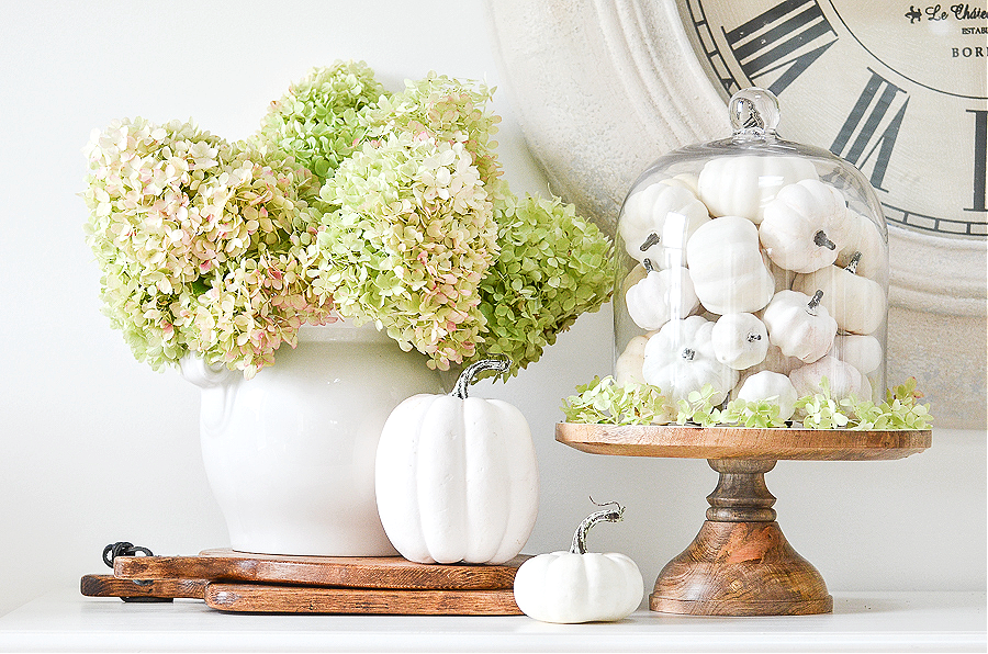 A PRETTY FALL ARRANGEMENTS MADE FROM WHITE PUMPKINS, GREEN HYDRANGEAS AND A CLOCHE