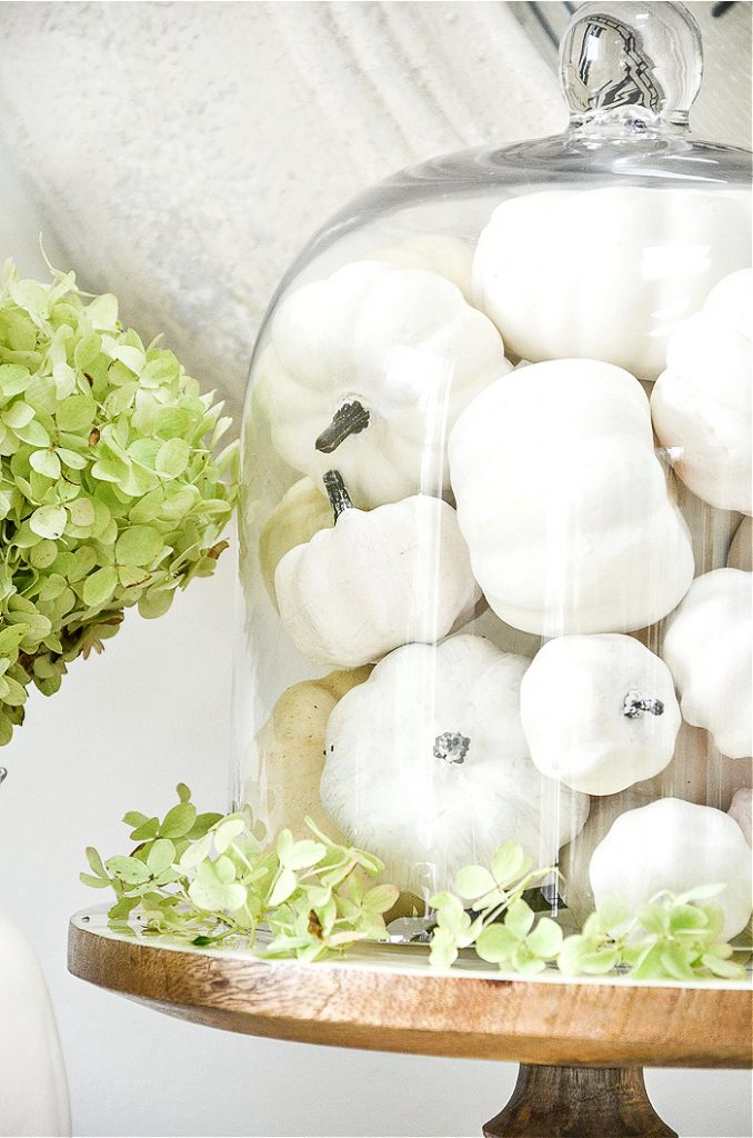 WHITE PUMPKINS IN A GLASS CLOCHE